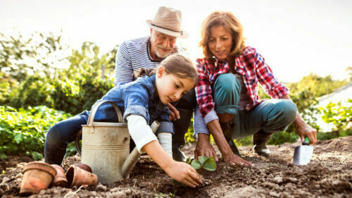 Happy healthy senior couple with their grandaughter planting a seedling on allotment. Man, woman and a small girl gardening.